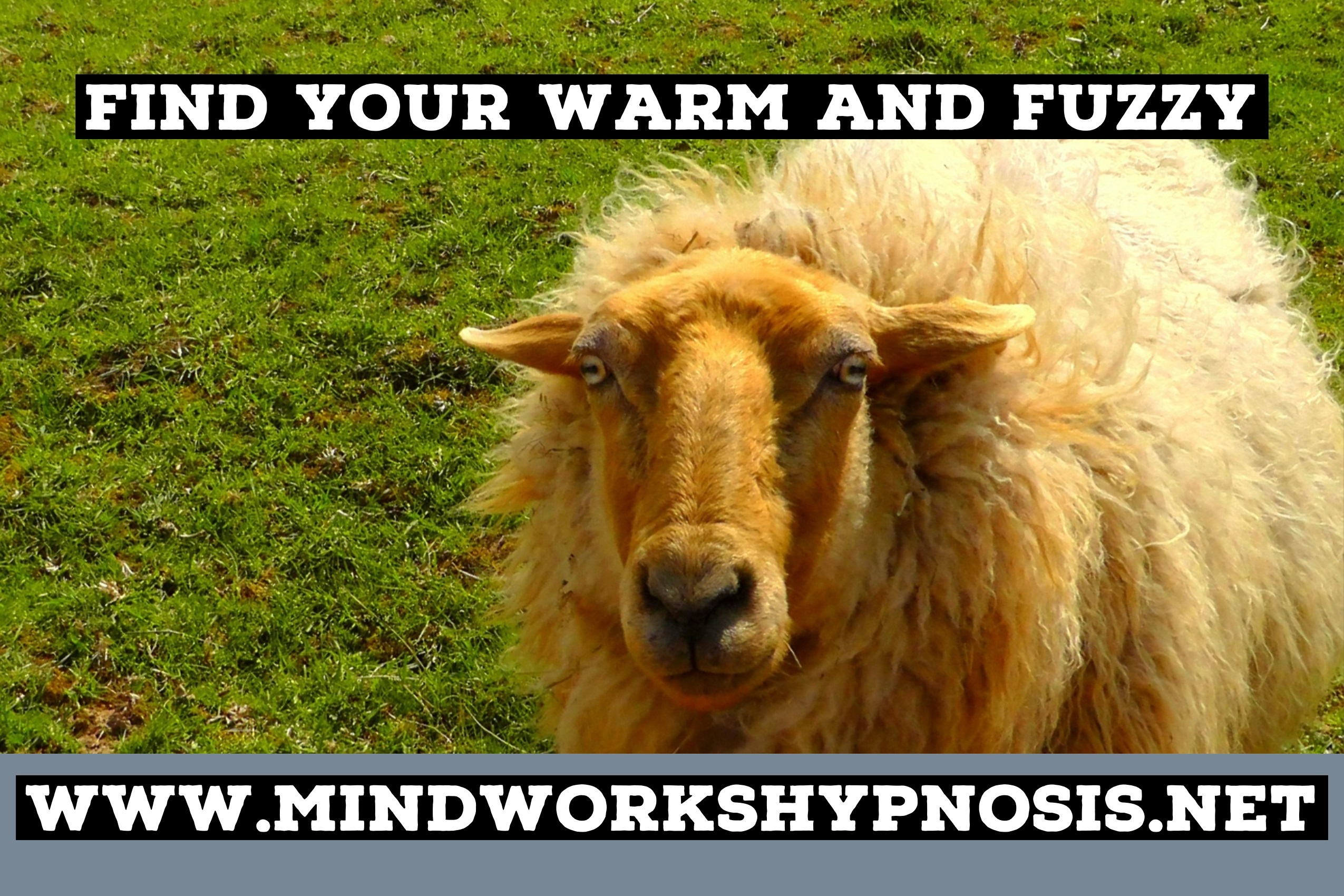 Find your warm and fuzzy as part of your Designer Feelings with Mindworks Hypnosis & NLP.